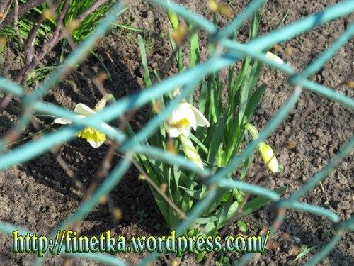 wiosna2014_4